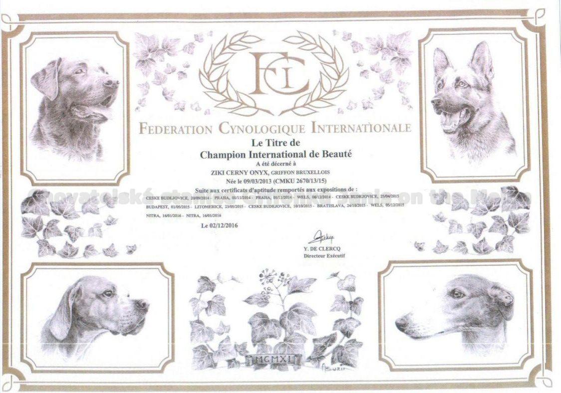 Ziki Mezinárodní šampion krásy